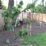 Food Forest Arrives