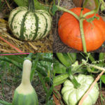 Gallery of Gourds