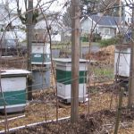 Intro to Beekeeping: Part I