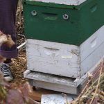 Intro to Beekeeping: Part III