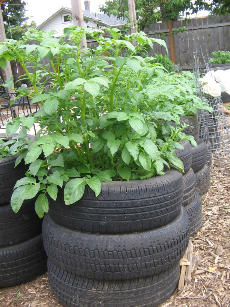 Prolific Potato Tires