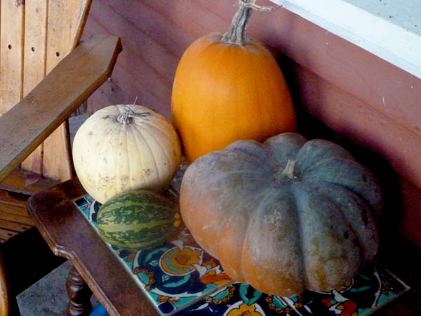 assorted-gourds