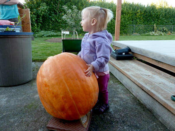 pumpkin-scale