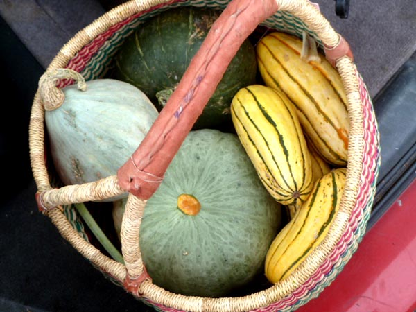 Cooking Winter Squash