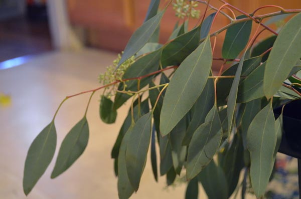 wedding-eucalyptus