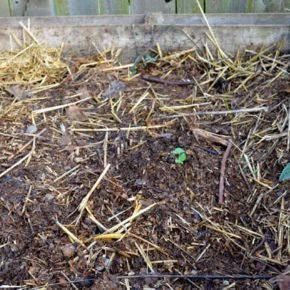 Winter Compost Maintenance