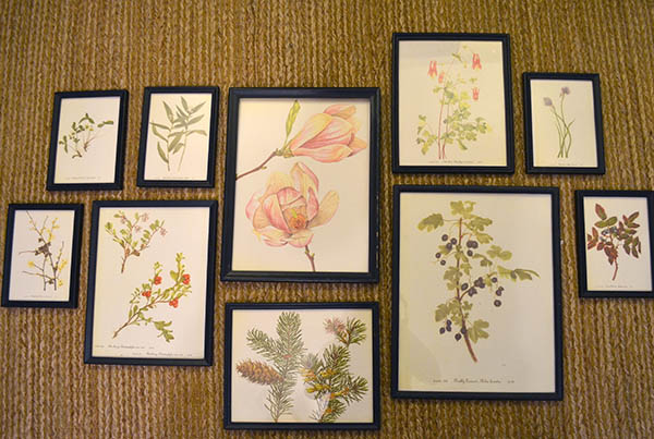 botanical-print-collection