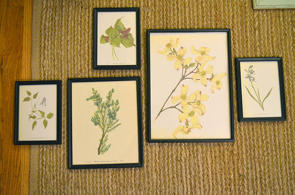 botanical-print-collection2