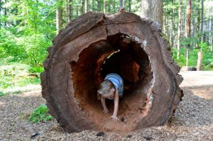 nature-play-hollow-log-adventure