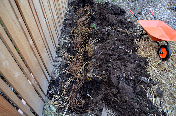 asparagus-bed-double-dig