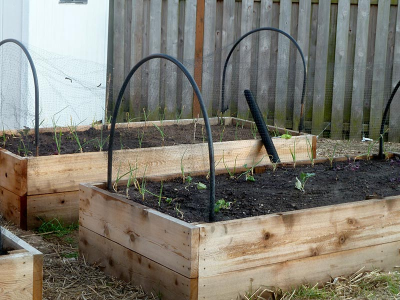 Cat-Proof Raised Beds