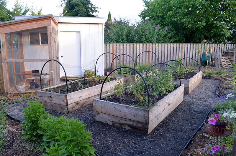 pathways-raised-beds