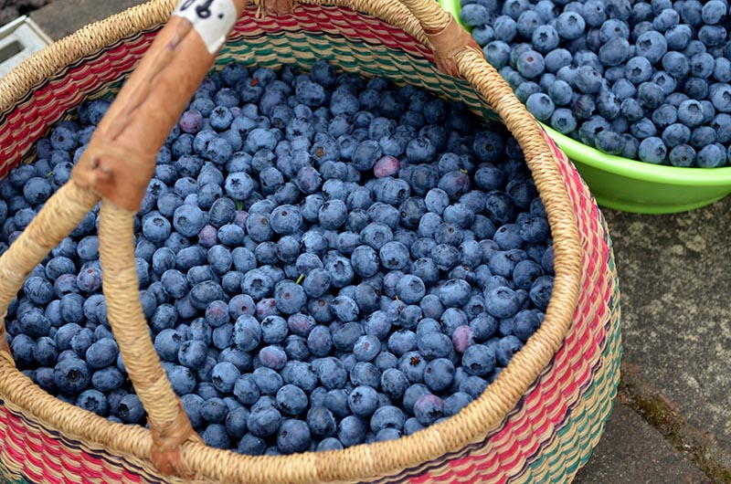 blueberries-basket