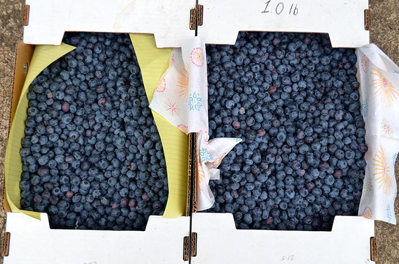 blueberries-boxes