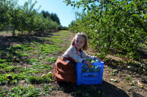 juniper-picking-2