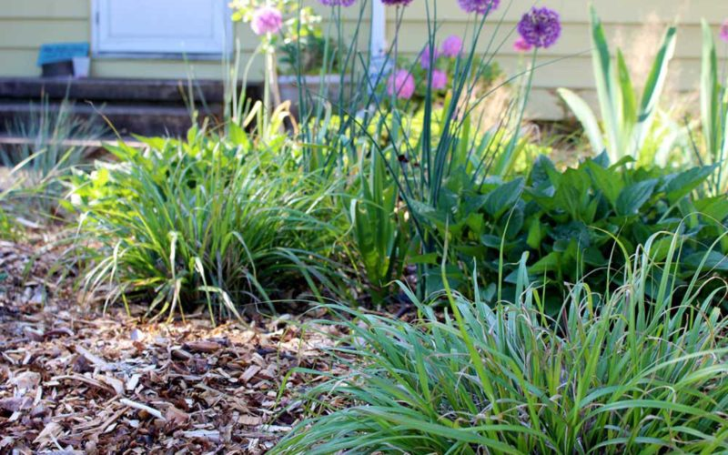 Using Wood Chips in the Garden