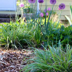 wood-chip-mulch-front-yard